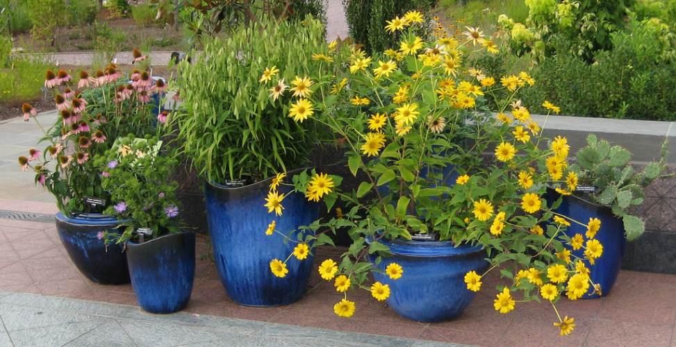 Rośliny w ozdobnych donicach