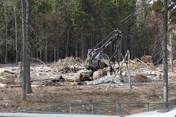 Drzewa na placu budowy