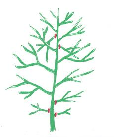 Cięcie drzewo kształcie płomykowatym